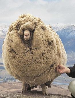 Преимущества шерстяных ковров